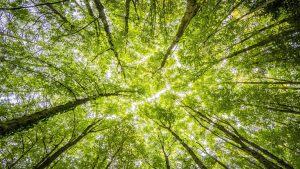 Print sustainability