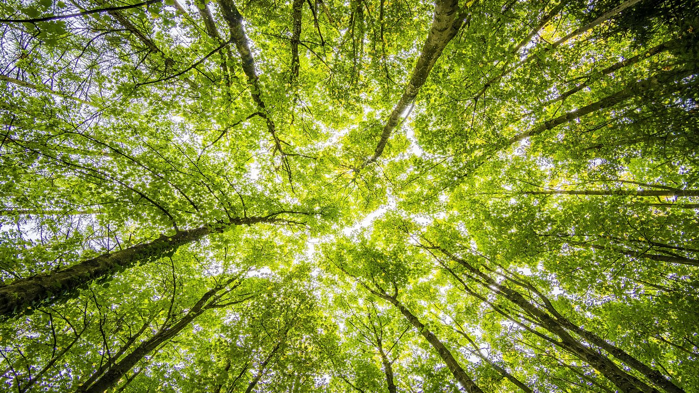 Read more about the article Print sustainability